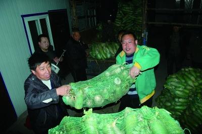 邯郸武安滞销萝卜被一连锁超市收购